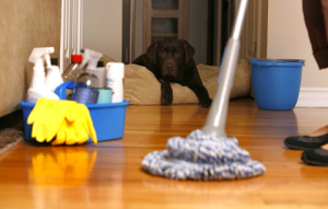 house cleaning dog